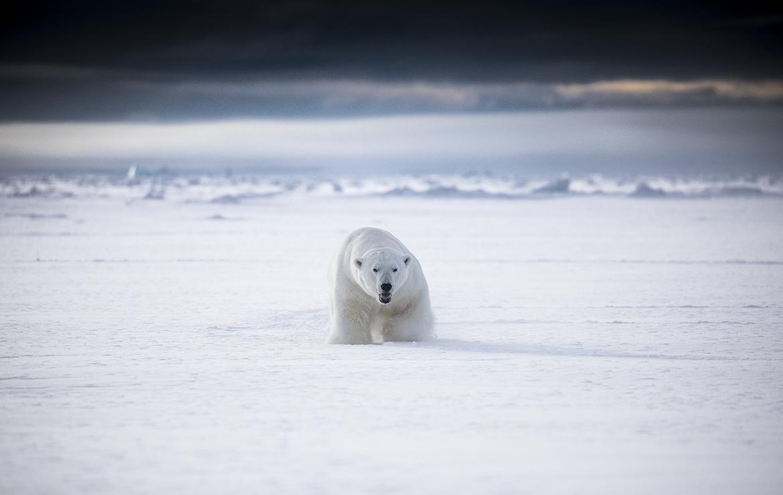 Winter in Svalbard