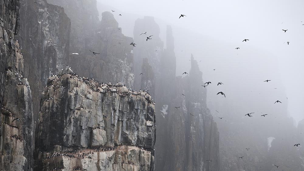 Alkefjellet, Svalbard ©-Marcel Schütz-2020