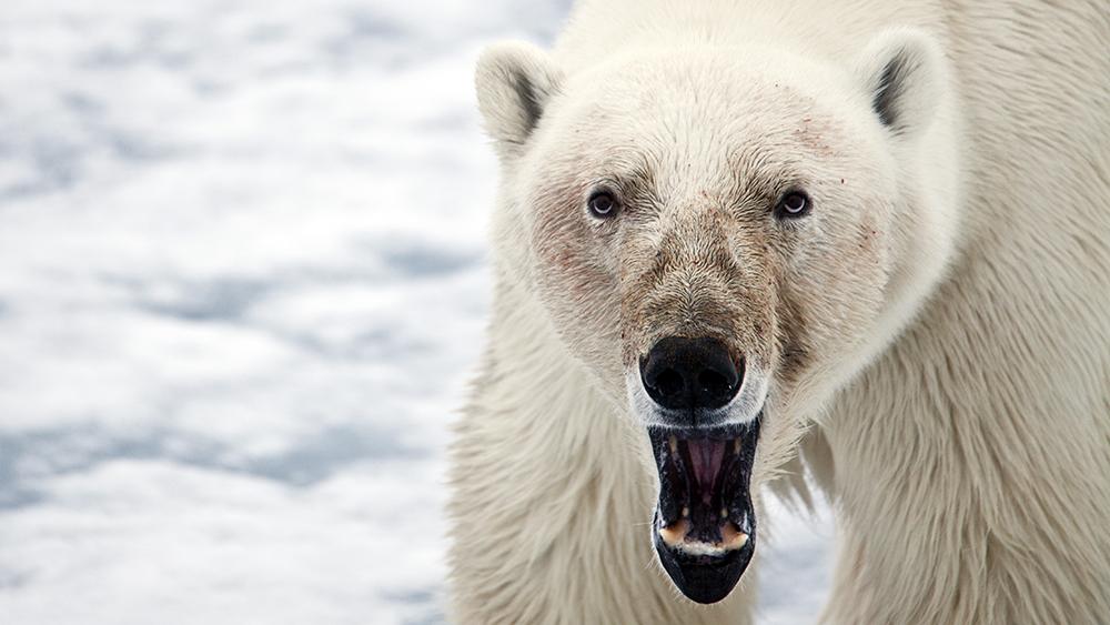 Polar Bear Photography ©-Marcel Schütz-2020