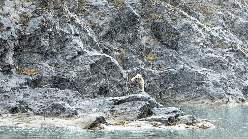 Polar Bear by Retrettøya ©-Marcel Schütz-2020