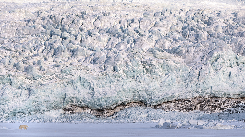 Polar Bear in front of a glacier ©-Marcel Schütz-2020